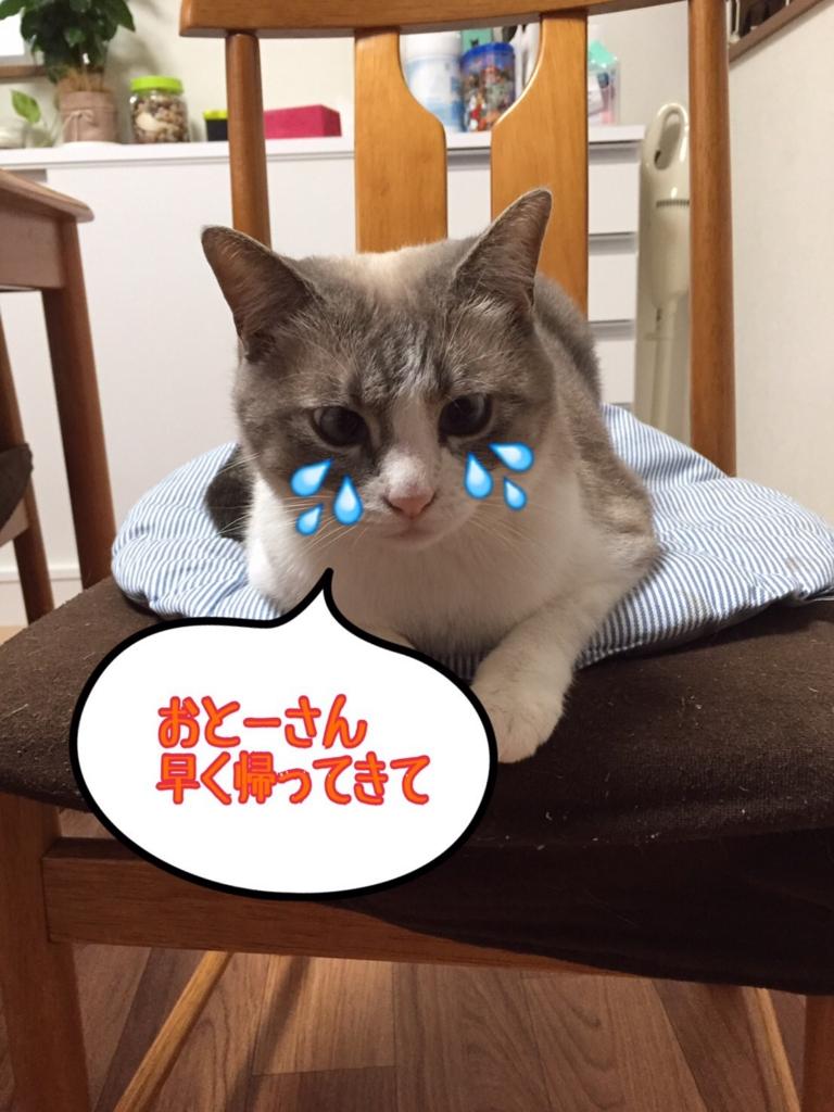 f:id:kiyomizu22233:20160807102958j:plain