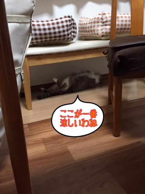 f:id:kiyomizu22233:20160808221834j:plain