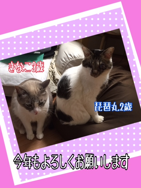 f:id:kiyomizu22233:20170109101650j:plain