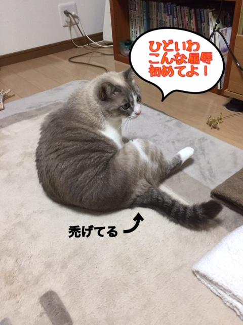 f:id:kiyomizu22233:20170109101814j:plain