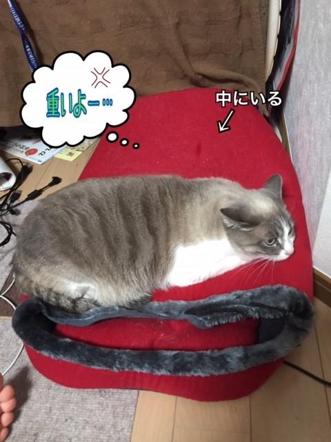 f:id:kiyomizu22233:20170523211048j:plain