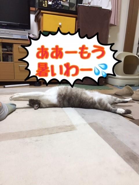 f:id:kiyomizu22233:20170523211130j:plain