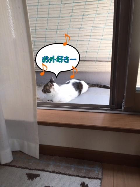 f:id:kiyomizu22233:20170523211154j:plain