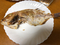 連子鯛塩焼き2 2020/01/23