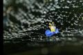 京都新聞写真コンテスト「蜘蛛さんごめんね」
