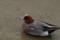 [ご近所][鳥][海辺][風景]