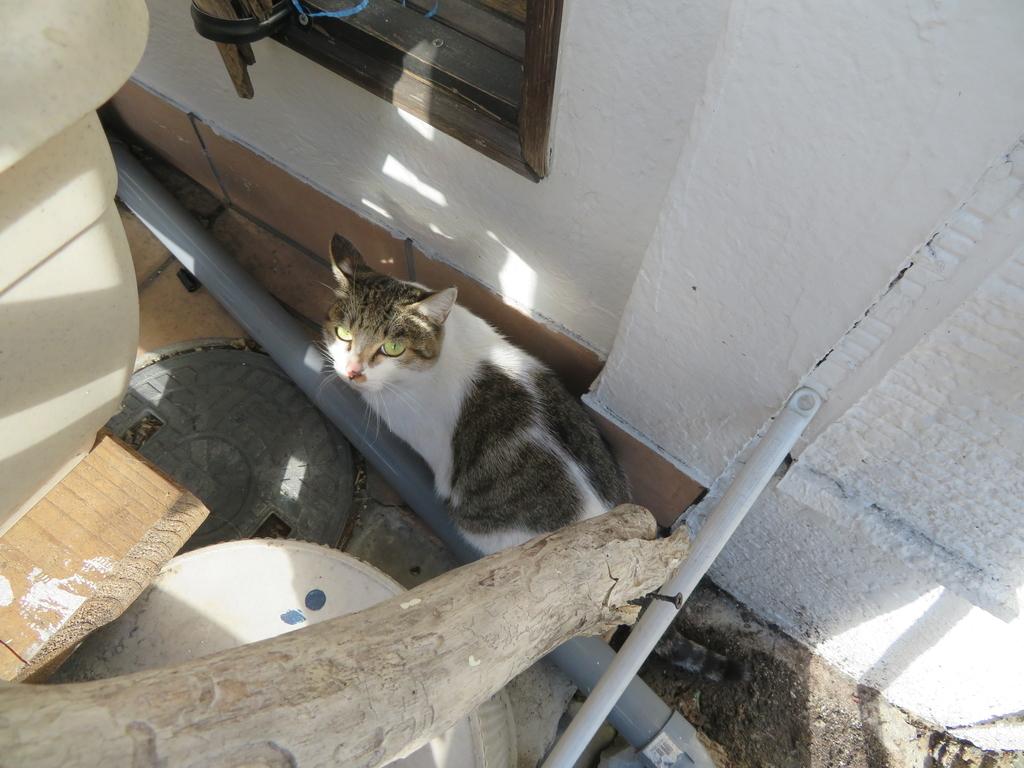 建物の間の隙間にいる猫