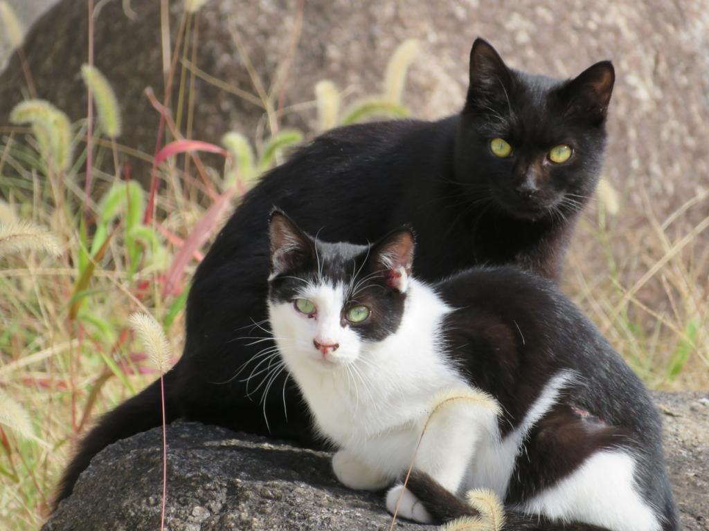 2匹仲良く日向ぼっこしてる猫
