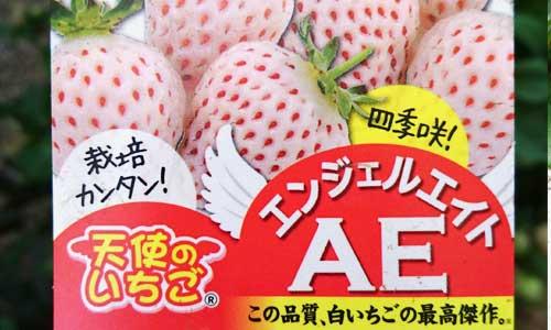 f:id:kizuki-ya-K:20180505173613j:plain