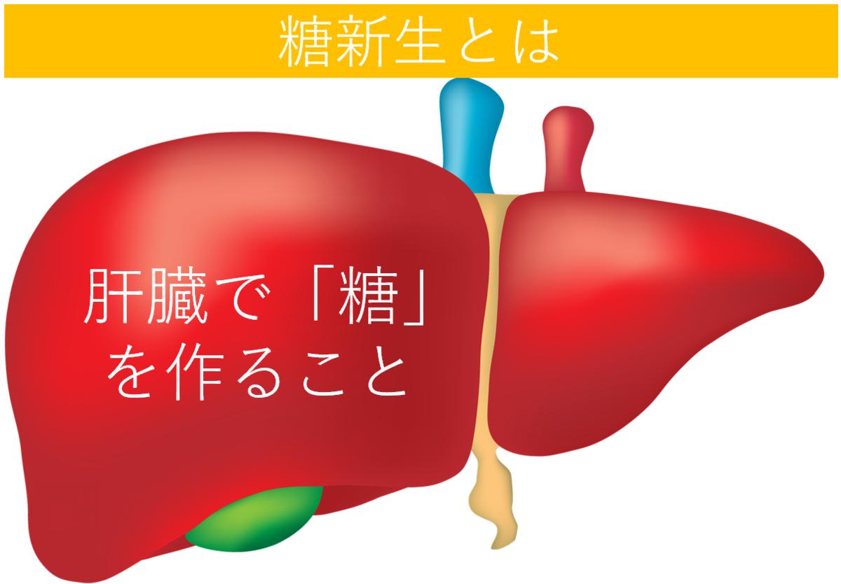 肝臓で糖を生み出す糖新生