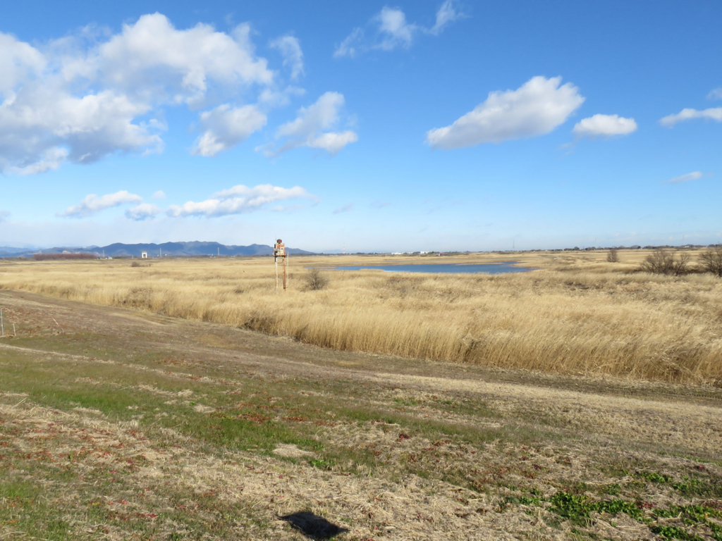 野鳥が好む環境 湿原・草原