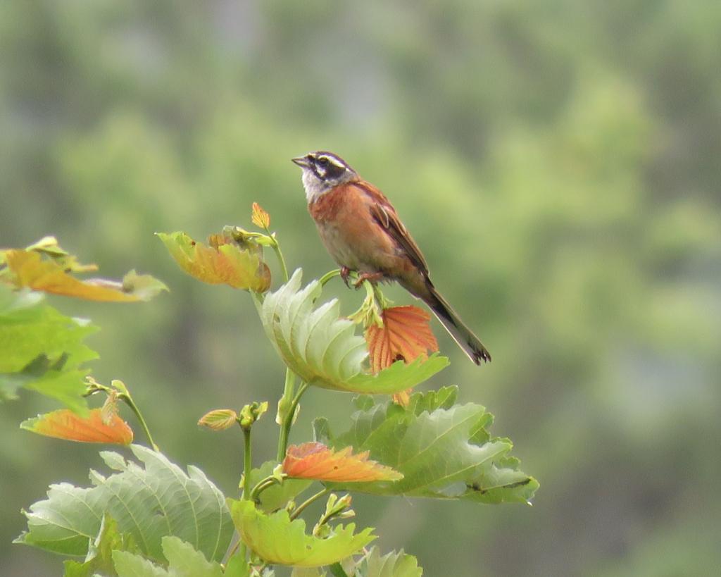 野鳥観察の魅力