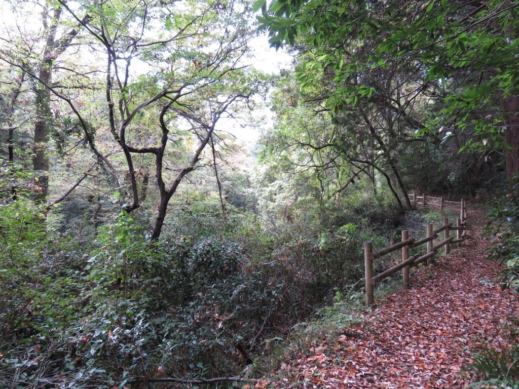 野鳥が好む環境 森
