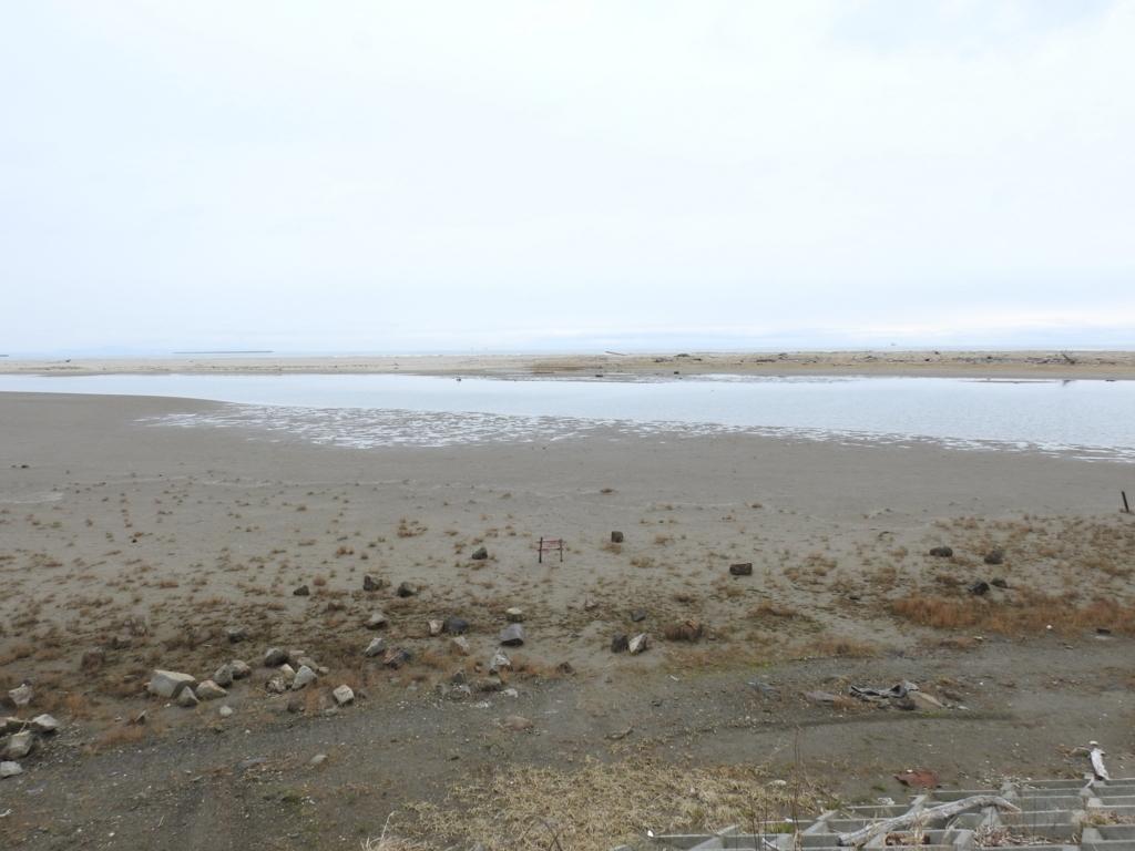 野鳥が好む環境 干潟