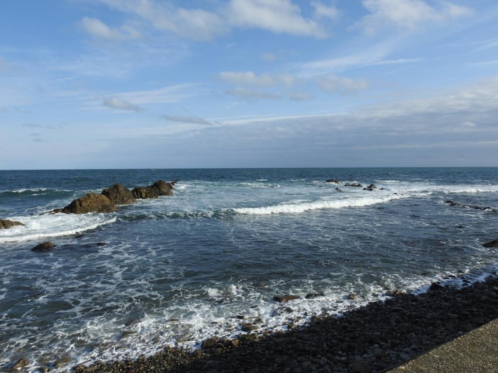 野鳥が好む環境 海