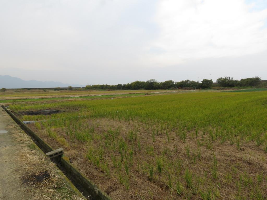 野鳥が好む環境 農耕地