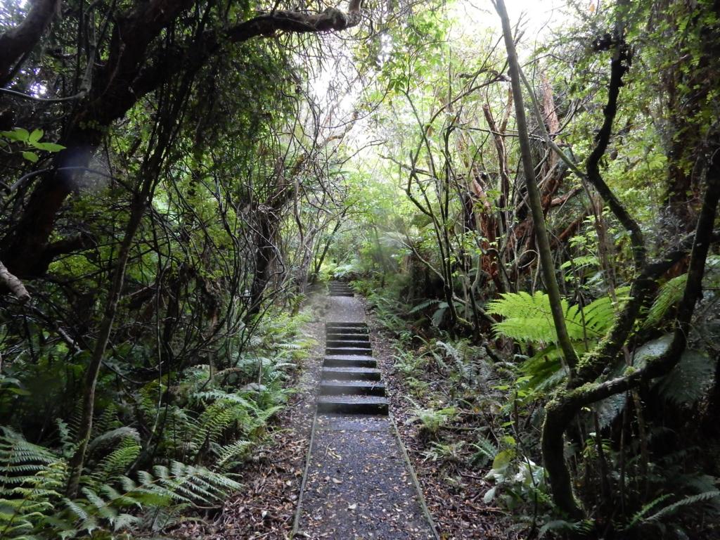 ニュージーランド スチュワート・アイランド