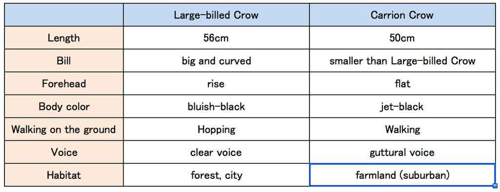 difference between Large-billed Crow and Carrion Crow