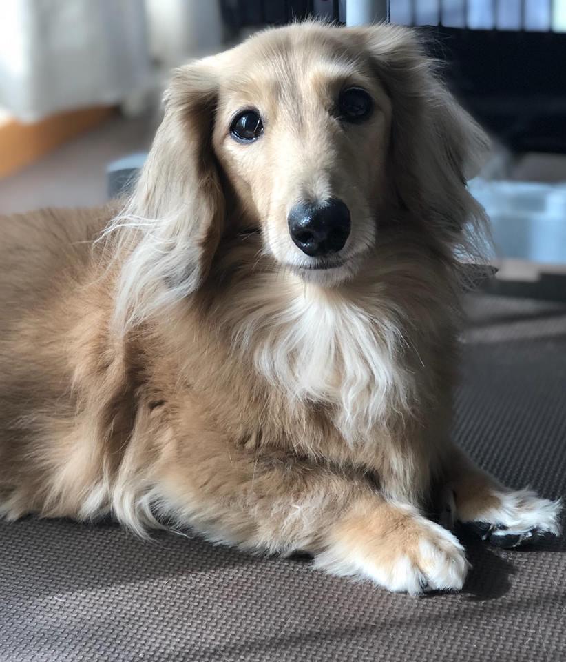 浜田さんの愛犬 チョコちゃん