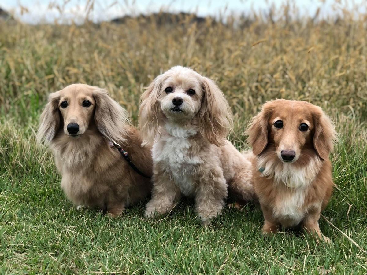 浜田さんの愛犬たち