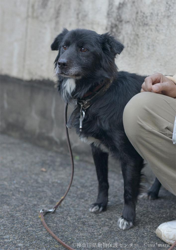 犬丸さんが撮影したクロトくん(現ヤマトくん)
