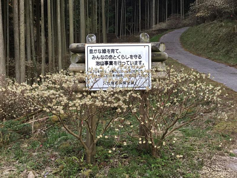 ミツマタ 植樹 看板