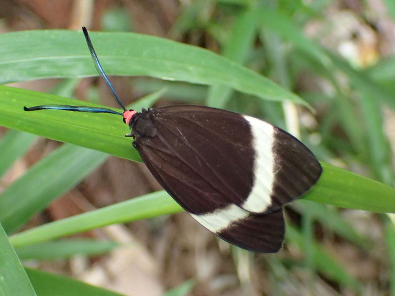 蝶 違い 蛾