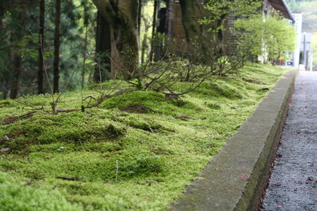 f:id:kkomiyama:20070502152415j:image