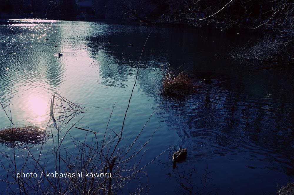 f:id:kkrg-kawloon:20190403223031j:plain