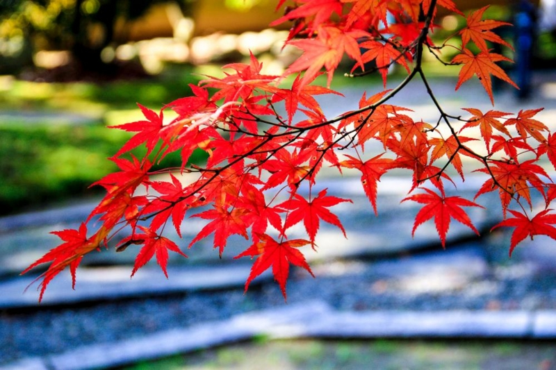 http://kmaeda16.hatenablog.jp/entry/2013/11/21/202130