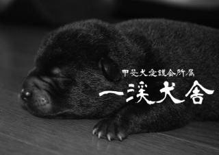 f:id:kmashi_oharu10:20170813214833j:plain