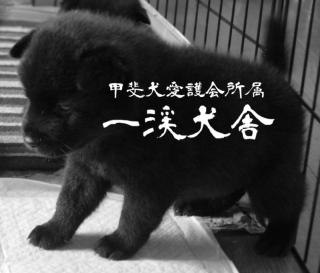 f:id:kmashi_oharu10:20170904221154p:plain