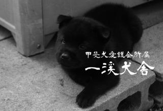 f:id:kmashi_oharu10:20170916191258j:plain