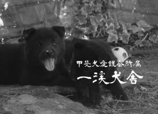 f:id:kmashi_oharu10:20170929203654p:plain