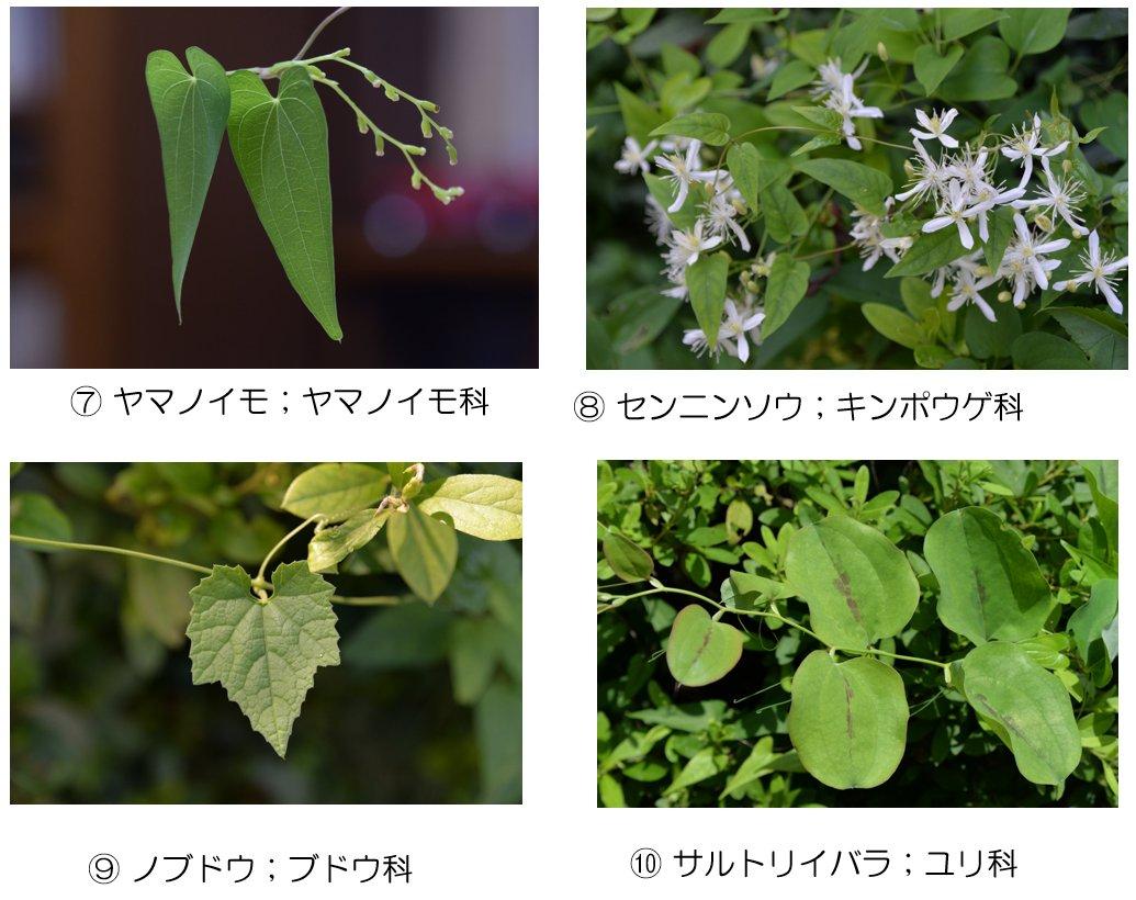 f:id:kn-shikajii:20190907232941j:plain