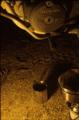 ガスランタンの灯