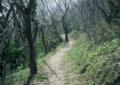 早春の猿山岬
