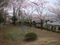 [桜]清水寺公園