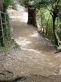 [桜]やまざくらの散る道