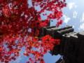[紅葉]大山の紅葉
