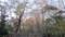 根津美術館の庭 初冬