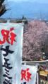 [桜]弥生神社桜の参道