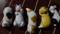 猫の箸置きbyなつかし屋