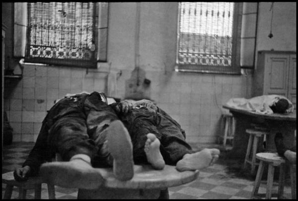 個別「ゲルダ・タロー」の写真、...