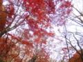 鎌倉 獅子舞