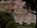 [桜]東京国立博物館