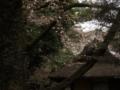[桜]春草盧