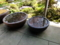海蔵寺の海棠