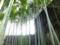 英勝寺の竹林