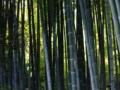 [鎌倉]英勝寺の竹林